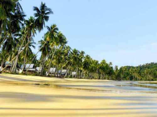 кокосовая вода: 10 доводов в ее пользу